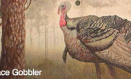 Sunday, November 15, 2:00 pm – Peace Gobbler Fund Raiser at Old Dog Tavern