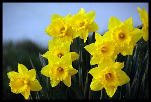 Spring flowers pictures and names image collections flower spring flowers names and images choice image flower decoration ideas names of spring flowers with pictures mightylinksfo